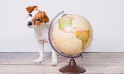 To już ostatnia szansa na aplikację na studia za granicą!